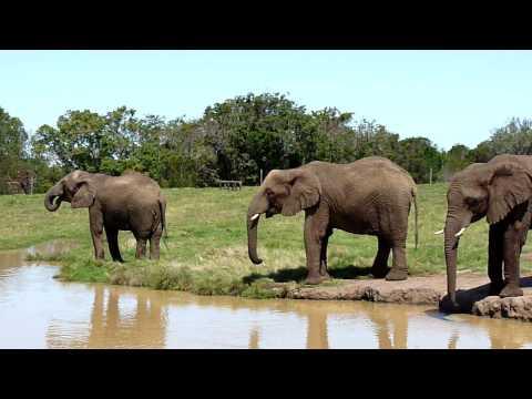 Elephant Sanctuary – Video 4 of 4