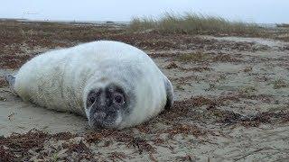 20190113 ~ Wadden Seal Pup