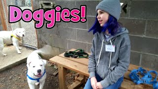 VOLUNTEERING At ANIMAL SHELTER VLOG   DOGS and CUTE PUPPIES!