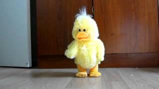Canard dansant