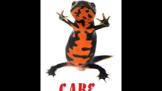 Chinese Fire Belly Newt Care width=