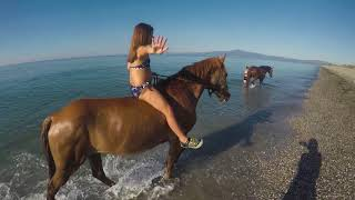 Swimming with horses in Kalamata Greece