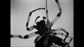 GHOSTMANE - Venom
