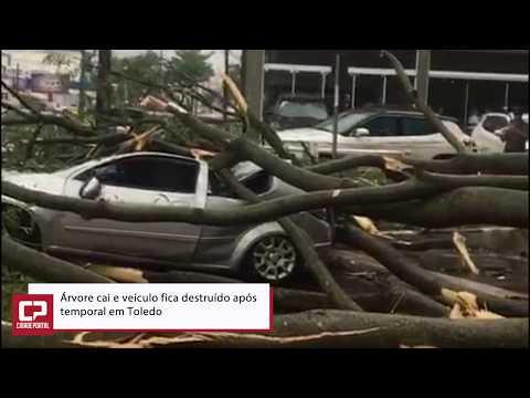 Temporal em Toledo derruba árvore e destrói veículo na área central da cidade