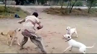 Pakistani Pathan Vs Dogs Amazing fight width=