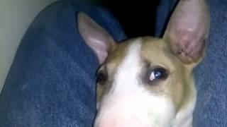 you sleepy buddy! (Poke dogs eye accident)
