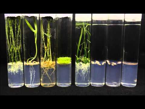 植物種子發芽,非經本人同意不得轉載 - YouTube