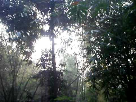 Nature of Bangladesh in a winter morning