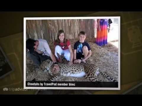 """""""Wine Tour & Spier Winery Bird and Cheetah rescue"""" Blmc's photos around Stellenbosch, South Africa"""