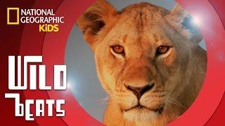 African Savanna (Music Video) feat. DJ Ecotone   WILD BEATS