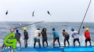 Cane Pole Fishing for TUNA…
