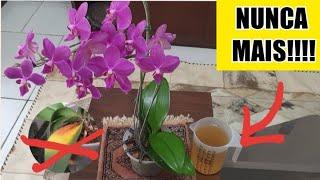 Passe essa solução na sua orquídea e se SURPREENDA! ? (folhas amarelas NUNCA MAIS!)
