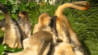 spider monkey orgy