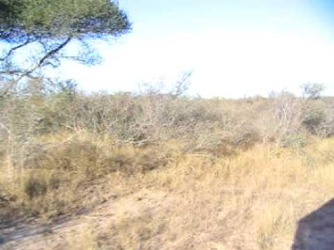 Bush Walk, Skukuza Camp in Kruger National Park in South Africa