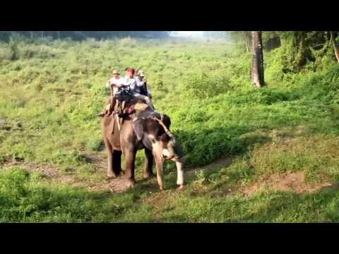 Nepal Chitwan 下大象的方法