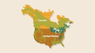 Wood Naturally - Lumber is Local and Sustainable