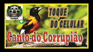 CANTO DO CORRUPIÃO 100% REAL TOQUE DO CELULAR  DESCARGA GRATIS  video YOUTUBE