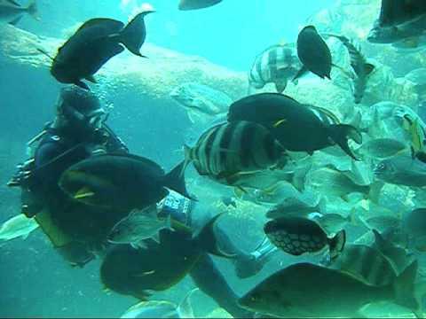 The Wreck Aquarium at uShaka Sea World
