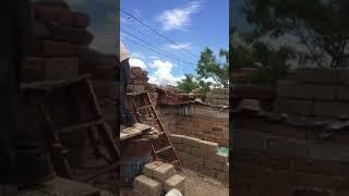 Papa chon in Florencia Zacatecas