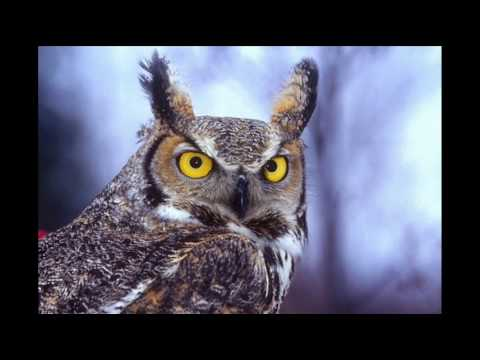 Mr Owl de Juan Son Of Letra y Video