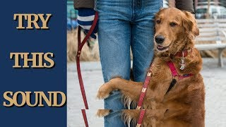 Scary Sound To Make Your Dog Come Close & Hug You  | try not to laugh lol