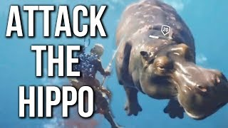 Assassin's Creed Origins Gameplay - ATTACKING A HIPPO | E3 2017 | Ubisoft Devs