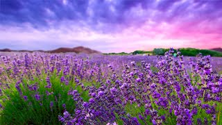 12 HOURS Relaxing Music for Stress Management, Healing Therapy, Sleep Music