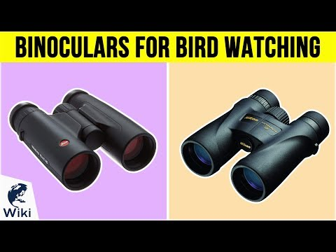 10 Best Binoculars For Bird Watching 2019