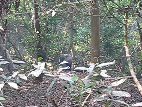 Walking in the jungle – Nepal