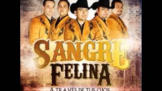 "SANGRE FELINA ""EL MIL AMORES"""