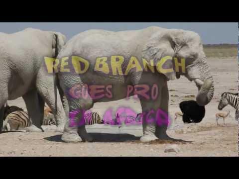 RedBranch Goes Pro