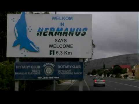 (Dutch) Whales, Sharks and the most Southern tip of Africa! (Beyond the 90 Minutes)
