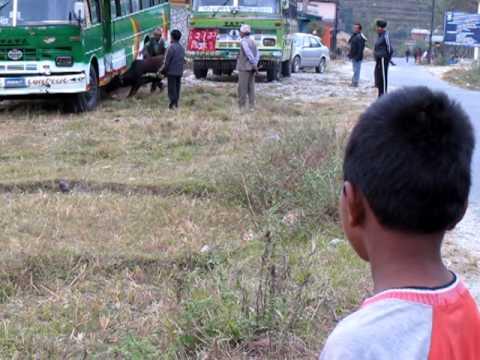 Men Shove a Cow into a Bus While Kid Watches & Surprise Ending
