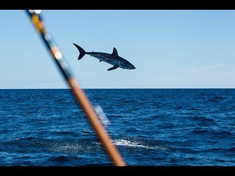 mako shark goes airborne 187 salt strong fishing community