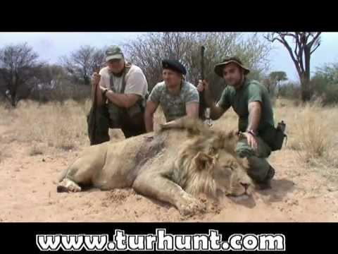 South Africa 2011 lion hunt – охота на льва ЮАР 2011