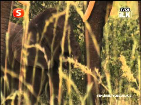 Samanyolu Tv Tehlikeli yolculuk özeti hayvanlar alemi belgeseli izle