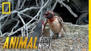 Homewrecking Penguin | Animal Fight Night (Original)
