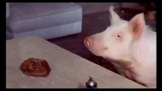 Arnold Ziffel's Conversation with a Beeping Moon Rock - Green Acres - 1970