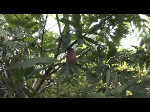 Kakao gegen Armut – Mit Oliver Coppeneur in Nicaragua