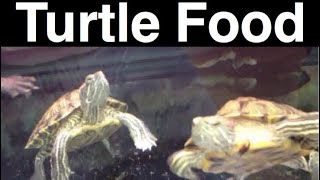What Do Turtles Eat? Feeding A Pet Turtle the Same?