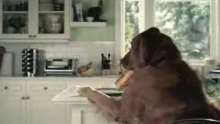 Salaud de chien.wmv