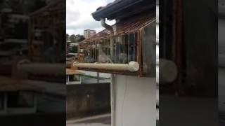 POMBO CORREIO DICA DO MARIO CEZAR PARA OS INICIANTES