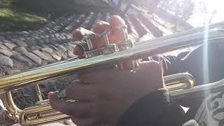 Despacito (cover trompeta) Paso a paso