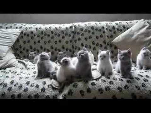 Techno Kittens