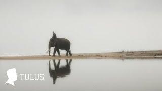 Gajah - Tulus
