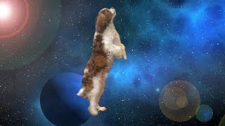 Apollo The Dog Travels Through Space & Time - Shooting Stars Meme