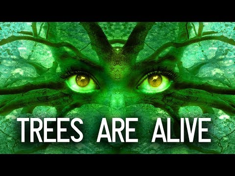 Download Video Are Trees Alive? Can Trees Talk?