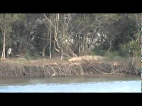 Lake St Lucia – South Africa Travel Channel 24