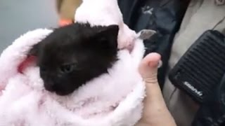 RAW VIDEO: Kitten saved from drowing in Clayton storm drain