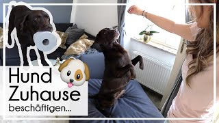 Hund Zuhause beschäftigen | 4 Tipps für die Wohnung | KaroLovesMilka #milkamittwoch